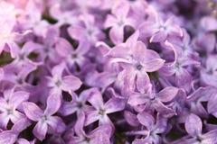 Υπόβαθρο των ιωδών λουλουδιών Στοκ Εικόνα