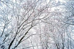 Υπόβαθρο των κλάδων δέντρων στο χιόνι στοκ φωτογραφία με δικαίωμα ελεύθερης χρήσης