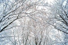 Υπόβαθρο των κλάδων δέντρων στο χιόνι στοκ φωτογραφία