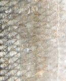 Υπόβαθρο των κλιμάκων ψαριών Μακροεντολή Στοκ φωτογραφία με δικαίωμα ελεύθερης χρήσης