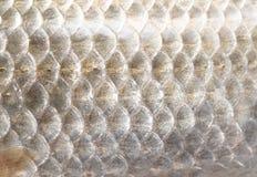 Υπόβαθρο των κλιμάκων ψαριών Στοκ Εικόνες