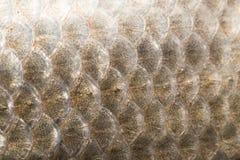 Υπόβαθρο των κλιμάκων ψαριών Στοκ Εικόνα