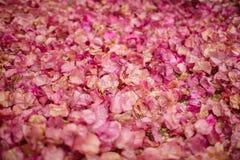 Υπόβαθρο των λουλουδιών bougainvillea Μικρά ρόδινα πέταλα ως σύσταση και υπόβαθρο floral πρότυπο καρδιών λουλουδιών απελευθέρωσης Στοκ Φωτογραφία