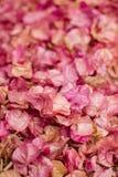 Υπόβαθρο των λουλουδιών bougainvillea Μικρά ρόδινα πέταλα ως σύσταση και υπόβαθρο floral πρότυπο καρδιών λουλουδιών απελευθέρωσης Στοκ εικόνες με δικαίωμα ελεύθερης χρήσης