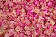 Υπόβαθρο των λουλουδιών bougainvillea Μικρά ρόδινα πέταλα ως σύσταση και υπόβαθρο floral πρότυπο καρδιών λουλουδιών απελευθέρωσης Στοκ Φωτογραφίες