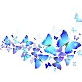 Υπόβαθρο των μπλε πεταλούδων Στοκ Φωτογραφίες