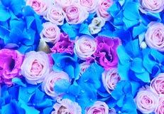 Υπόβαθρο των λουλουδιών - τριαντάφυλλα, eustomy, hydrangeas στοκ εικόνα