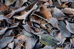 Υπόβαθρο των πεσμένων φύλλων που καλύπτονται με το hoarfrost στοκ εικόνες με δικαίωμα ελεύθερης χρήσης