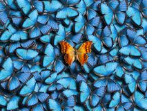 Υπόβαθρο των πεταλούδων στοκ εικόνες