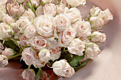 Υπόβαθρο των πολλών λεπτών μικρών ρόδινων τριαντάφυλλων Στοκ εικόνες με δικαίωμα ελεύθερης χρήσης
