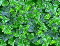 Υπόβαθρο των πράσινων φύλλων απεικόνιση αποθεμάτων