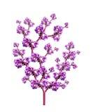 Υπόβαθρο των ρόδινων λουλουδιών Στοκ Φωτογραφίες