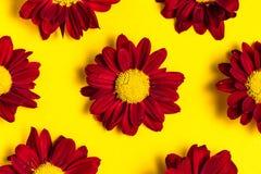 Υπόβαθρο των σκούρο κόκκινο λουλουδιών σε κίτρινο Τοπ όψη Στοκ Φωτογραφίες
