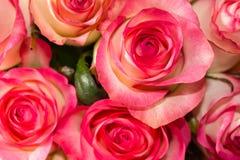 Υπόβαθρο των τριαντάφυλλων λουλουδιών Στοκ Εικόνες