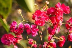 Υπόβαθρο των τριαντάφυλλων φθινοπώρου Στοκ Εικόνες