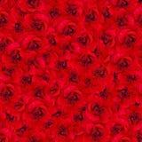 Υπόβαθρο των φωτεινών κόκκινων τριαντάφυλλων τριαντάφυλλα προτύπων άνε&upsi Μίμηση του μολυβιού σχεδίων Στοκ εικόνα με δικαίωμα ελεύθερης χρήσης