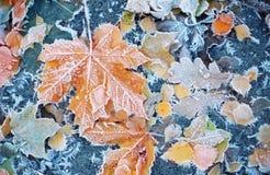 Υπόβαθρο των φύλλων φθινοπώρου στον παγετό Στοκ Εικόνα