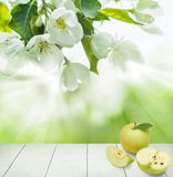 Υπόβαθρο υγείας άνοιξη με τα πράσινα φρούτα της Apple Στοκ Εικόνες