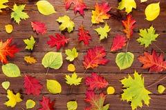 Υπόβαθρο φθινοπώρου με τα κίτρινα, κόκκινα και φωτεινά φύλλα φύλλωμα φθινοπώρου στο παλαιό ξύλο Στοκ εικόνες με δικαίωμα ελεύθερης χρήσης