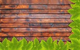 Υπόβαθρο φθινοπώρου με τα πράσινα φύλλα στον ξύλινο πίνακα Στοκ Φωτογραφία