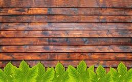 Υπόβαθρο φθινοπώρου με τα πράσινα φύλλα στον ξύλινο πίνακα Στοκ εικόνες με δικαίωμα ελεύθερης χρήσης