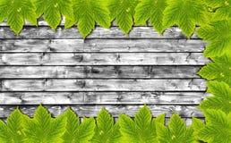 Υπόβαθρο φθινοπώρου με τα πράσινα φύλλα στον ξύλινο πίνακα B&W Στοκ Εικόνες
