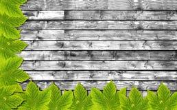 Υπόβαθρο φθινοπώρου με τα πράσινα φύλλα στον ξύλινο πίνακα B&W Στοκ φωτογραφίες με δικαίωμα ελεύθερης χρήσης
