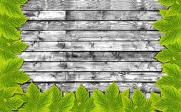 Υπόβαθρο φθινοπώρου με τα πράσινα φύλλα στον ξύλινο πίνακα B&W Στοκ φωτογραφία με δικαίωμα ελεύθερης χρήσης