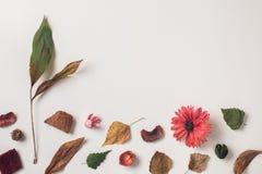 Υπόβαθρο φθινοπώρου με το διάστημα αντιγράφων για το κείμενο από την κορυφή Στοκ Εικόνα
