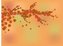 Υπόβαθρο φθινοπώρου, μύγα φύλλων φθινοπώρου από έναν κλάδο Ελεύθερη απεικόνιση δικαιώματος