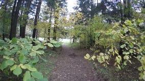 Υπόβαθρο φθινοπώρου σκηνής χρώματος πάρκων Οκτωβρίου, που περνά μέσω των κίτρινων φύλλων κλάδων στο φύλλωμα δέντρων απόθεμα βίντεο