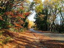 Υπόβαθρο φθινοπώρου του παλαιού δάσους στοκ φωτογραφία με δικαίωμα ελεύθερης χρήσης