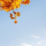 Υπόβαθρο φθινοπώρου Στοκ Εικόνες