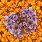 Υπόβαθρο φιαγμένο από πεταλούδες των διάφορων λουλουδιών Στοκ Εικόνα