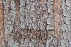 Υπόβαθρο φλοιών δέντρων υποβάθρου φλοιών δέντρων Στοκ Φωτογραφίες