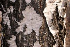Υπόβαθρο φλοιών σημύδων στοκ φωτογραφίες με δικαίωμα ελεύθερης χρήσης