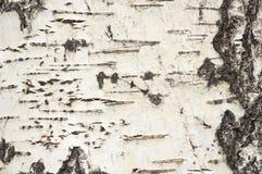 Υπόβαθρο φλοιών της Aspen στοκ εικόνες με δικαίωμα ελεύθερης χρήσης