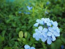 Υπόβαθρο φρεσκάδας λουλουδιών φύσης Στοκ φωτογραφία με δικαίωμα ελεύθερης χρήσης
