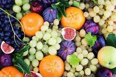 Υπόβαθρο φρούτων με το δαμάσκηνο, Apple Στοκ φωτογραφίες με δικαίωμα ελεύθερης χρήσης