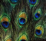 Υπόβαθρο φτερών πουλιού Στοκ Εικόνα