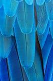 Υπόβαθρο φτερών Στοκ εικόνα με δικαίωμα ελεύθερης χρήσης