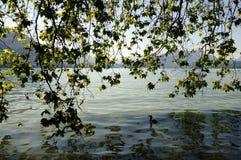 Υπόβαθρο φυλλώματος και λιμνών στη λίμνη του Annecy, Γαλλία Στοκ Φωτογραφία