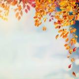 Υπόβαθρο φυλλώματος φθινοπώρου με τα brunches και τα μειωμένος φύλλα δέντρων στον ουρανό με το bokeh Στοκ Εικόνα