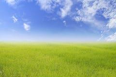 Υπόβαθρο φύσης άνοιξης ή καλοκαιριού και υπόβαθρο τομέων ρυζιού Στοκ Φωτογραφία