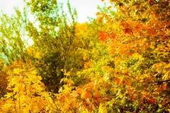 Υπόβαθρο φύσης δέντρων πτώσης φύλλων φθινοπώρου Στοκ Φωτογραφία