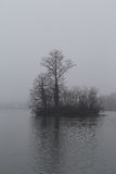 Υπόβαθρο φύσης: Απόκοσμο νησί και δέντρο Στοκ Φωτογραφίες