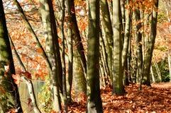 Υπόβαθρο φύσης εποχής φθινοπώρου των κορμών δέντρων Στοκ Εικόνες