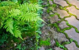 Υπόβαθρο φύσης και σύσταση ή ταπετσαρία Στοκ εικόνα με δικαίωμα ελεύθερης χρήσης