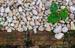 Υπόβαθρο φύσης και σύσταση ή ταπετσαρία Στοκ Εικόνα