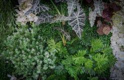 Υπόβαθρο φύσης και σύσταση ή ταπετσαρία Στοκ Φωτογραφία